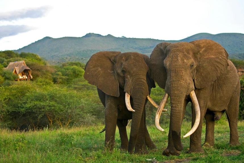 Elephants in Chyulu Hills National Park Kenya