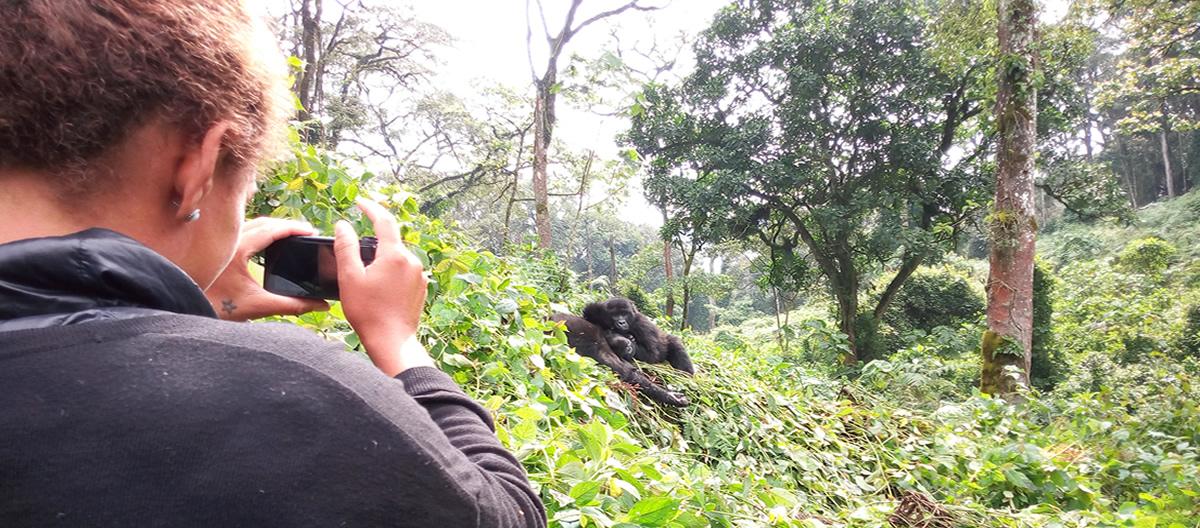 Gorilla Trekking in Uganda - Bwindi National Park