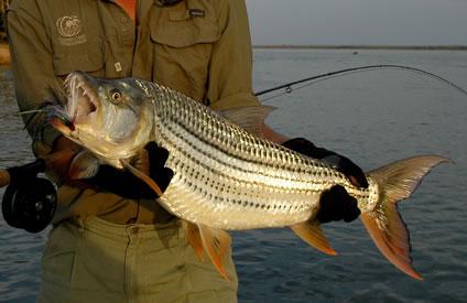 Sport Fishing - Zambia - Lake Tanganyika