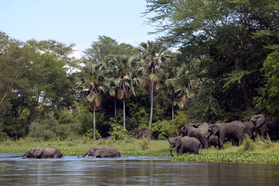 African Elephants in Lilonde Malawi